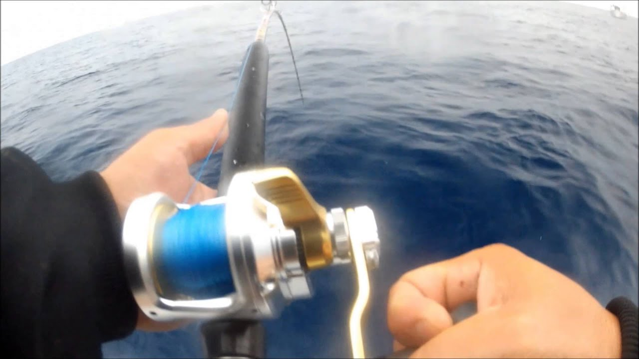 Pacific bluefin tuna fishing 2013 seaforth landing seeker for Seaforth landing fish report