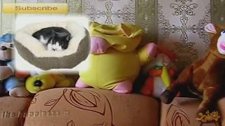 Кошкин дом #Прикольное видео про кошек #Приколы с кошками #Funny cats compilation #LUCKY(Что такое красота? Это дом, где два кота. Что такое теснота? Это дом, где три кота. Что такое чистота? Это дом,..., 2014-09-21T16:18:21.000Z)