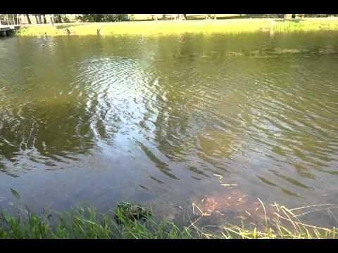 Sheldon lake state park gator youtube for Sheldon lake fishing