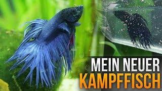 Mein neuer Kampffisch (Mini-Vlog #56)