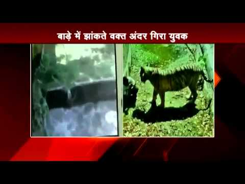 Live Video  White tiger kills Class 12 student at Delhi zoo Part 21