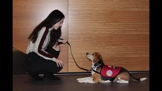 ♡ Fun Photo Shoot with Service Dogs! (06.06.18) | Amy's Life ♡