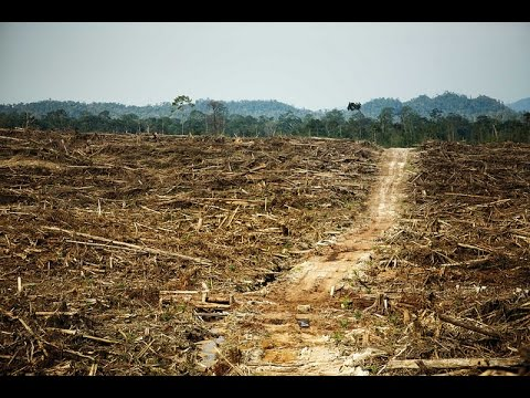 Destruction of the Rainforest by Palm Oil Companies HD