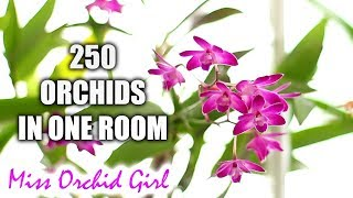 How I grow various Orchids in one room - My