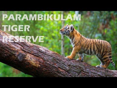 parambikulam Tiger reserve Kerala പറമ്പിക്കുളം 2018