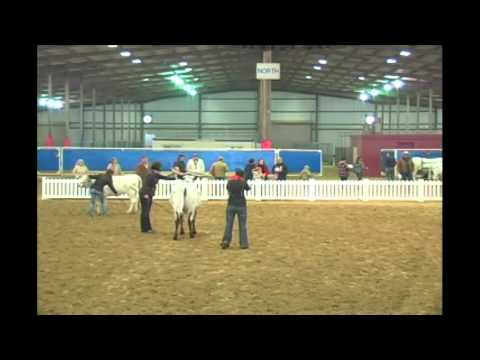 Open And Youth Longhorn Show- Broadcast - Competitive Events Rodeo Austin