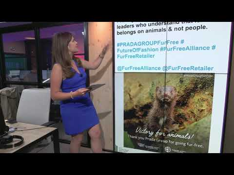 euronews (in English): Prada to ban fur from products by 2020   #TheCube