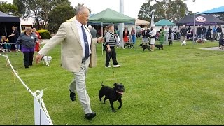 Staffordshire Bull Terrier Club Of Vic