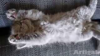 Малыши котята спят )))  Cute Cats are Sleeping (it's amazing)