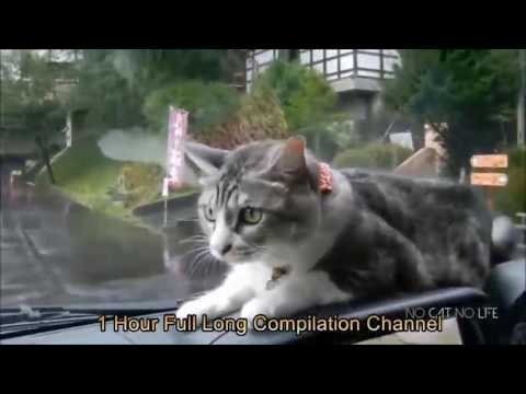 10 hours cat compilation