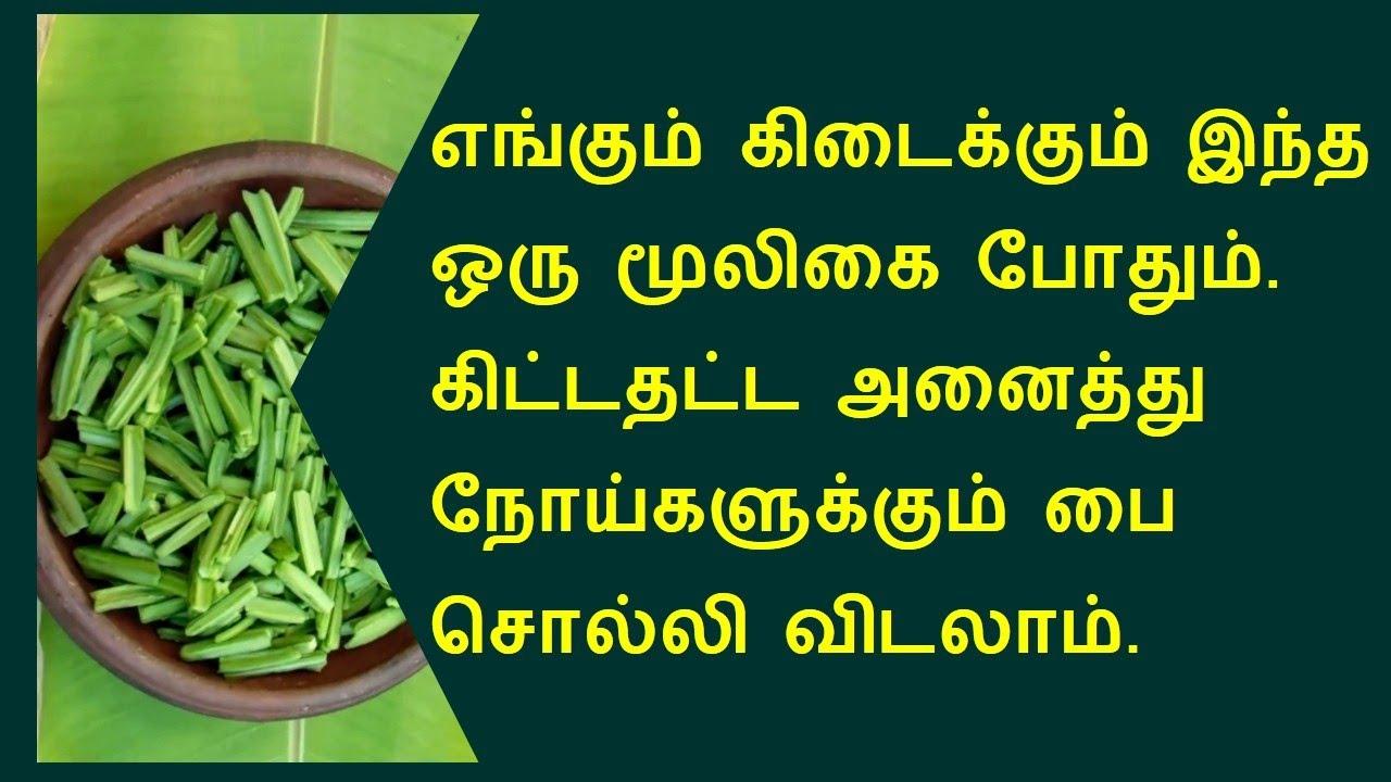 அனைத்து நோய்களுக்கும் ஒரு மூலிகை | Pirandai health benefits in tamil