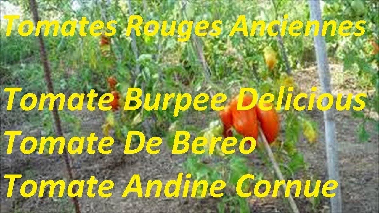 vari t s tomates rouges anciennes1 tomate burpee delicious. Black Bedroom Furniture Sets. Home Design Ideas