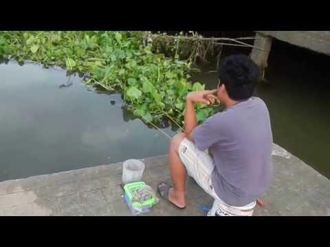คุยกับคนตกกุ้งริมแม่น้ำแม่กลอง