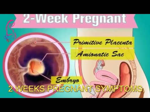 2nd-week-of-pregnancy-and-2-weeks-pregnant-symptoms-early-signs-of-pregnancy-|-pregnancy-term