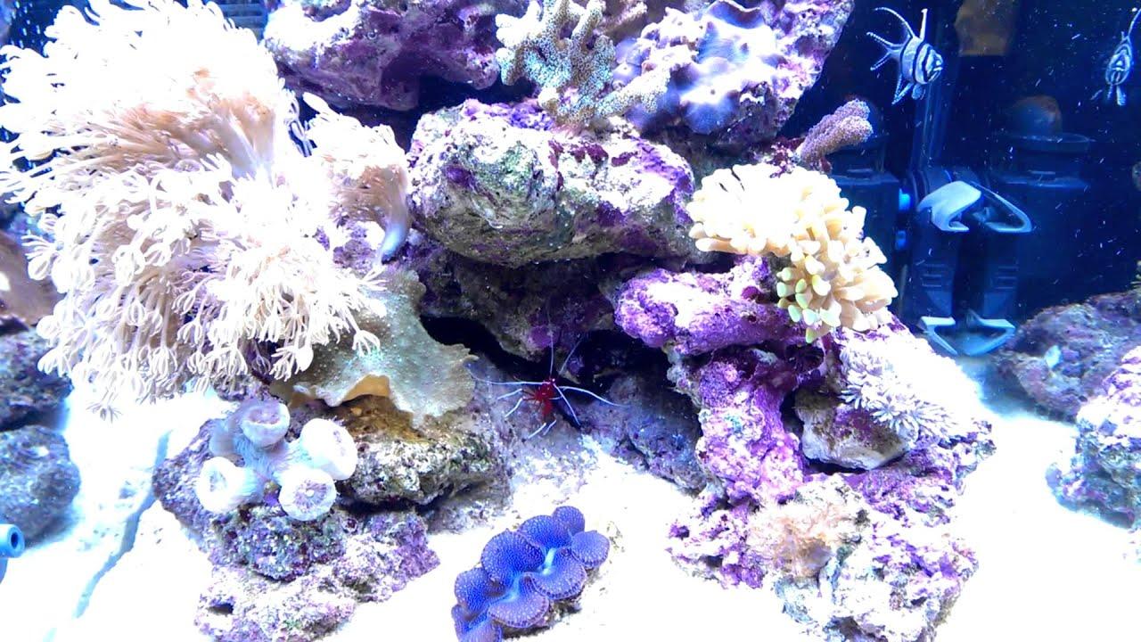 dennerle nano reef tank 60l 3 kauderni fische besatz einri youtube. Black Bedroom Furniture Sets. Home Design Ideas