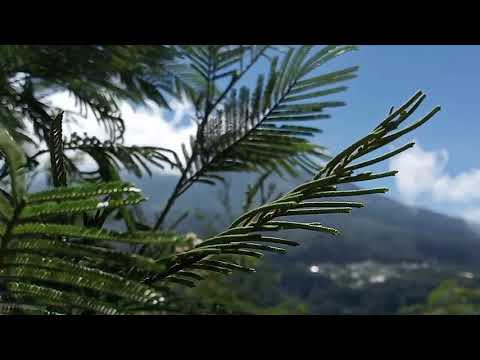 relaxing-music-|-relaxing-massage-music-|-mountain-breeze-|-easy-listening-music