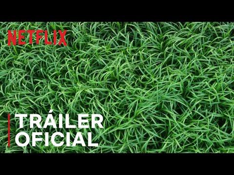 En la hierba alta   Tráiler oficial   Netflix