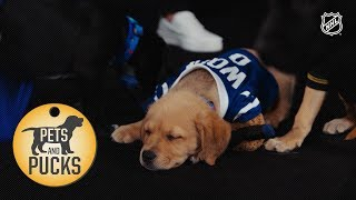 2018 NHL All Star Puppy Draft