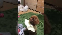 石井正善 - YouTube