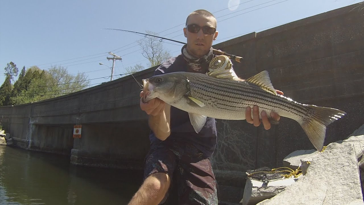 Striped bass fly fishing rhode island youtube for Best striper fishing spot in ri