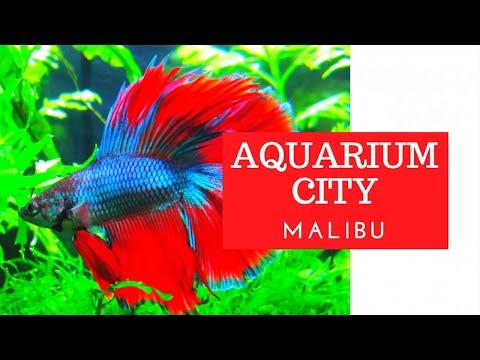 Aquarium Services In Malibu