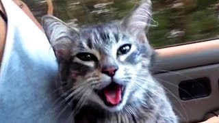 Cute and Funny Cat Videos to Do You a Laugh! 🐱