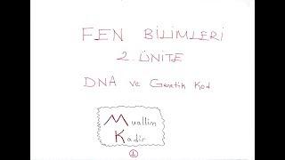 8. Sınıf Fen Bilimleri DNA ve Genetik Kod 2