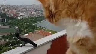 Very funny  A cat talking with a crow