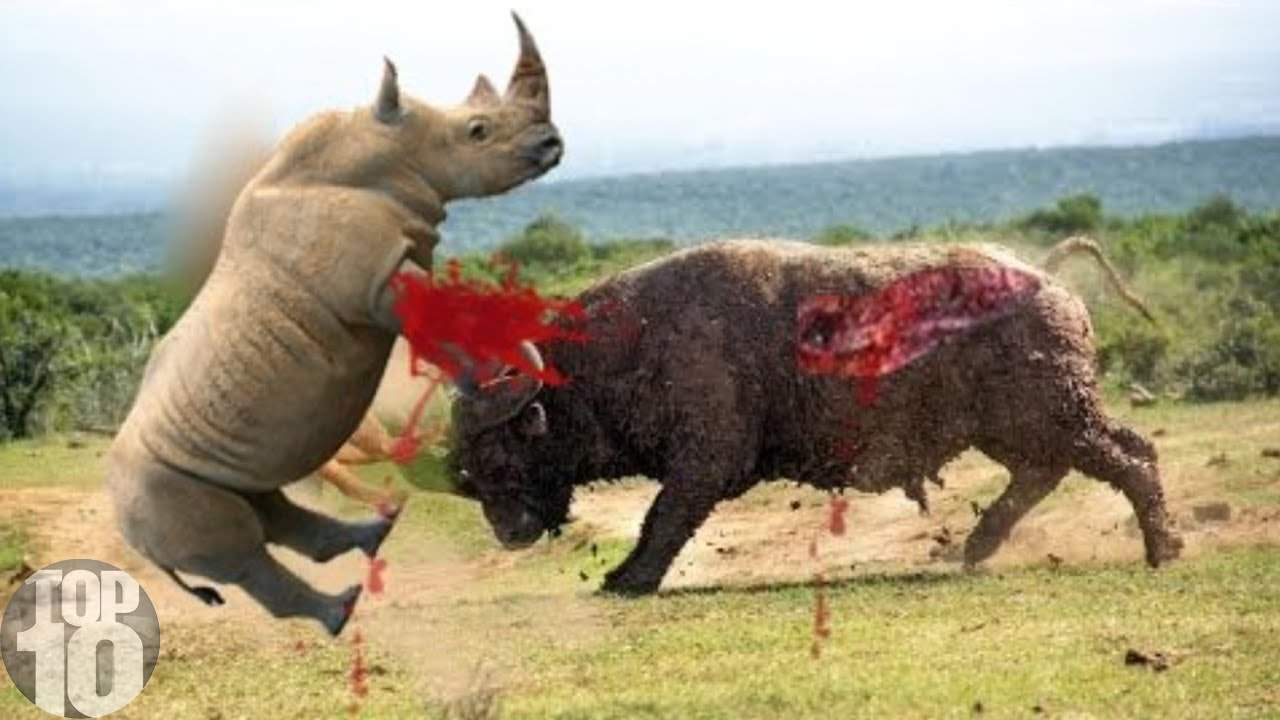 Download 10 CRAZIEST Animal Fights Caught On Camera Part 2