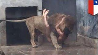 [Best Animal Fights]  [Wild Animal Attack]  Deadliest Animal Attacks On Human Part 2  - Animal Atta
