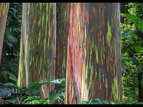 Jennie James - Magical Rainbow Trees Are Real!