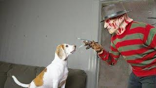 Freddy and Cute Dog are Best Friends: Cute Dog Maymo
