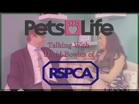 Talking with David Bowles from RSPCA