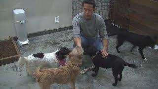 Защитник животных из США ездит в Азию спасать собак (новости)
