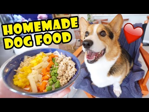 my-corgi's-reaction-to-homemade-cooking-for-the-week-  -life-after-college:-ep.-641