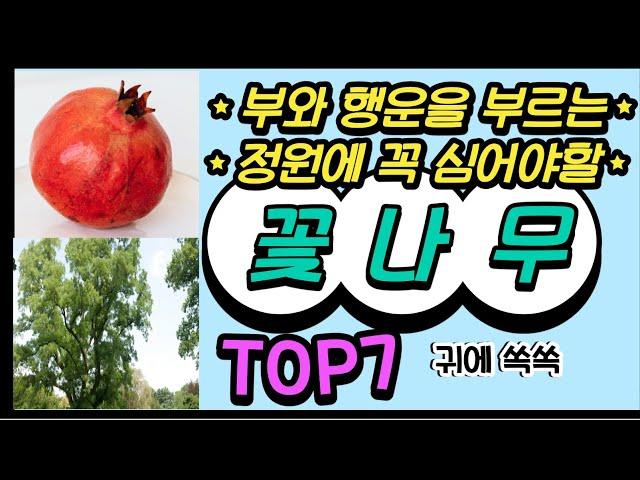 [부자식물Top7] 정원에 반드시 심어야할 부자 되는 꽃과 나무 7가지 money trees #김성숙tv가드닝스쿨