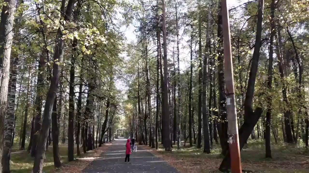 Санковское чудо видео в парке 10
