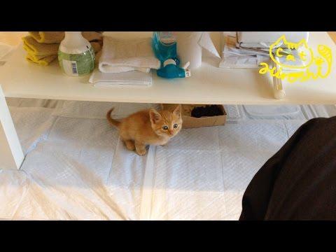 Cute Cat Hiroshi: Don't pee on the carpet! - YouTube