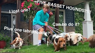 House sitting FIVE basset hounds