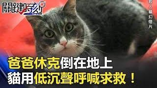 「冷漠貓」救一命!爸爸休克倒在地上 貓用低沉聲呼喊求救 關鍵時刻 20180327-6 朱學恒 馬西屏