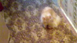 кошка дерётся с пылесосом