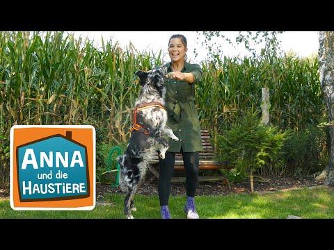 Australian Shepherd   Information für Kinder   Anna und die Haustiere