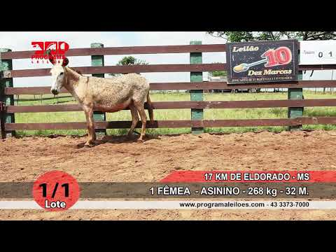 LOTE 01 1