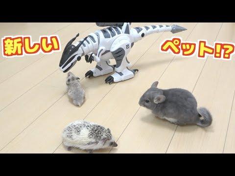 ペット3匹と恐竜のラジコンを遊ばせたらかわいすぎた!!
