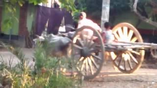 Cow Car । Bullock cart । Gorur Gari