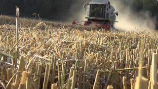Ostatnie Żniwa 2014 - Pszenica ᴴᴰ  - Claas, Massey Ferguson, MetalTech