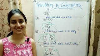 Translation in Eukaryotes | Lecture 12
