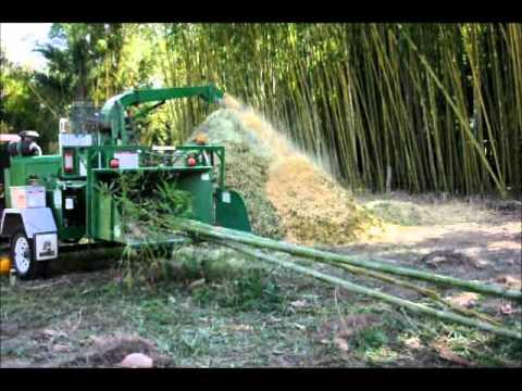 Chipping bamboo at Bamboo Land, Australia