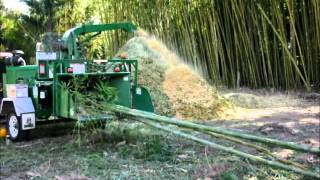 Chipping bamboo at Bamboo Land, Australia