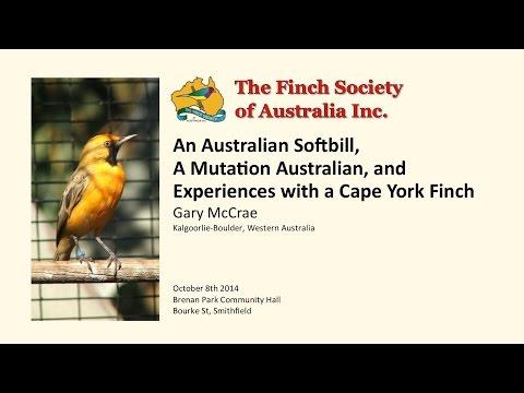 An Australian Softbill, A Mutation Australian, and Experiences with a Cape York Finch - Gary McCrae